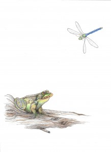 frog & Dragonfly